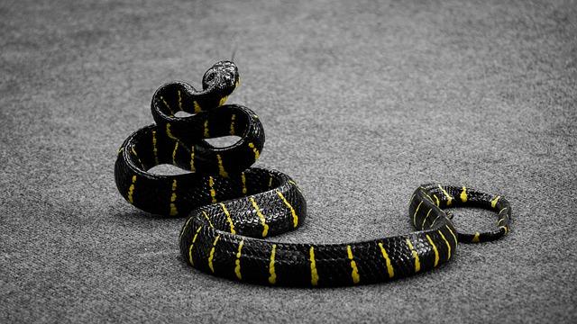 snakeproof boots to buy amazon 2019